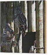 Pair Of Owls Wood Print