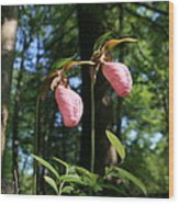 Pair Of Pink Lady Slippers  Wood Print