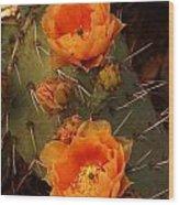 Pair Of Prickly Pear Cactus Blooms In The Sandia Foothills Wood Print