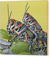 Pair Of Rainbow Grasshoppers On Ocotillo Wood Print