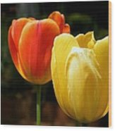 Pair Of Red And Yellow Tulips Wood Print