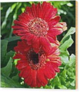 Pair Of Red Gerber Daisy Flowers With Ladybug Wood Print
