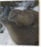 Pair Of River Otters   #1266 Wood Print
