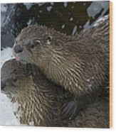 Pair Of River Otters   #1301 Wood Print