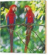 Pair Of Scarlet Macaws Wood Print