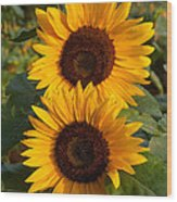 Pair Of Sunflowers Wood Print