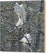 Paired Egrets At Lake Martin Louisiana Wood Print