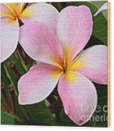 Palacious Pink Plumeria Wood Print