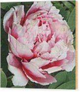 Pale And Dark Pink Peony Wood Print