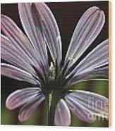 Pale Blue Flower Backlit Wood Print