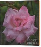 Pale Pink Beauty Wood Print
