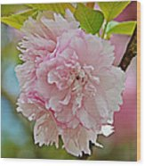 Pale Pink Blossoms Wood Print