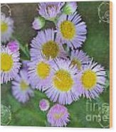 Pale Pink Fleabane Blooms With Decorations Wood Print