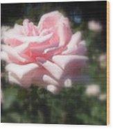 Pale Pink Rose I Wood Print