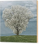 Pale White Tree On Cloudy Spring Day E83 Wood Print