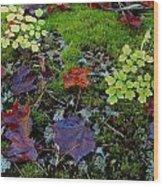 Palette Of Colour Wood Print