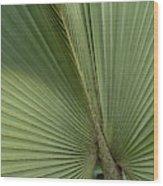 Palm, Belize Botanic Garden Wood Print