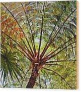 Palm Canopy Wood Print