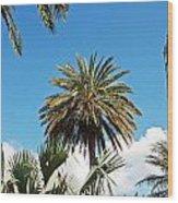 Palm City Wood Print