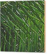 Palm Crosshatch Wood Print