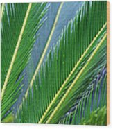 Palm Cycas Fronds Wood Print