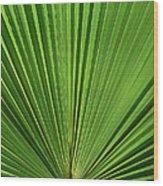 Palm Fan Design Wood Print