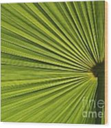 Palm Fron Abstract Wood Print