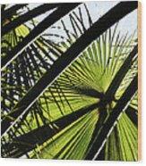La Palm 3  Wood Print