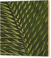 Palm Frond Patterns Wood Print