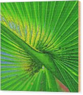 Palm Frond Work A Wood Print