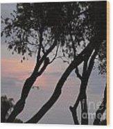 Palm Haven Wood Print