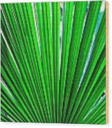 Palm Leaf 6687 Wood Print
