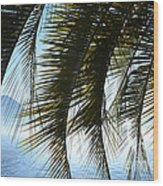 Palm Leaves Wood Print
