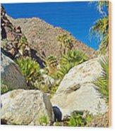 Palm Oasis On Borrego Palm Canyon Trail In Anza-borrego Desert Sp-ca Wood Print