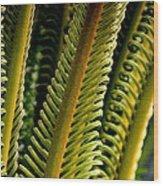 Palm Reading Wood Print