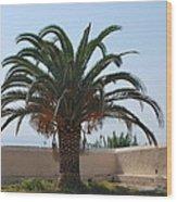 Palm Tree 3 Wood Print