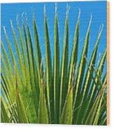 Palm Tree And Blue Sky 2/06 Wood Print