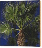Palm Tree At Night Wood Print