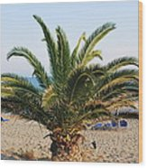 Palm Tree By The Beach Wood Print