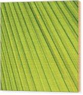 Palm Tree Leaf Abstract Wood Print