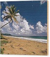 Palm Tree On Maunabo Beach Puerto Rico Wood Print