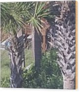 Palm Tree Scenery Wood Print