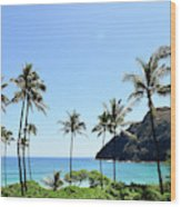 Palm Trees Along The Coast Of Waimanalo Wood Print