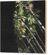 Palm Trees At Night Wood Print