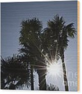 Palm Trees In Backlit Wood Print