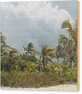 Palm Trees In Sunlight Wood Print