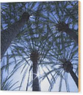 Palm Trees In The Sun Wood Print