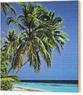 Palm Trees On Little Palm Island Filtered Wood Print