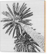 Palm Tree White Wood Print