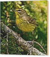 Palm Warbler Pictures 38 Wood Print
